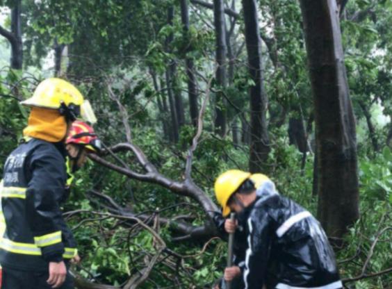 树倒拉断天燃气管道,福田上万户居民停气,将持续到17日下午