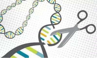 世界首例免疫艾滋的基因编辑婴儿引发大讨论
