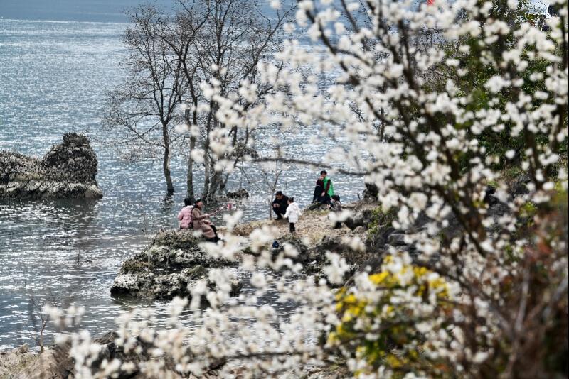 花有梗!接棒春节档,全国各地迎来愉悦赏花季