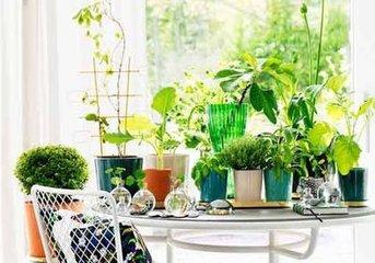 10种最适合摆放在室内的盆栽植物