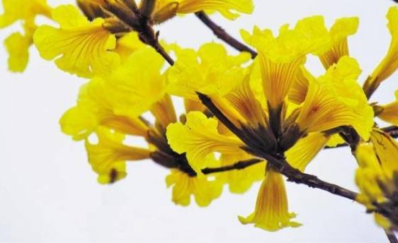 阳春三月花似锦,深圳这几个公园赏花最佳