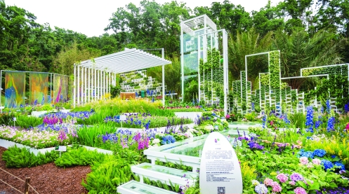 1100多个品种!深圳国际花展今日开幕