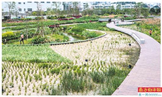 宝安茅洲河碧道计划年底前完成5个节点建设