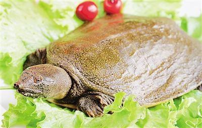 龟类是否禁食成焦点,深圳禁食野生动物条例即将提交审议