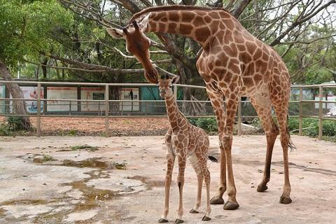 深圳野生动物园将于3月21日恢复开园,快来与小动物来个约会