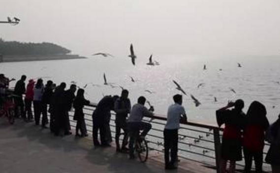 """""""海上看深圳""""游轮航线延长引争议,候鸟栖息、红树林保护受关注"""