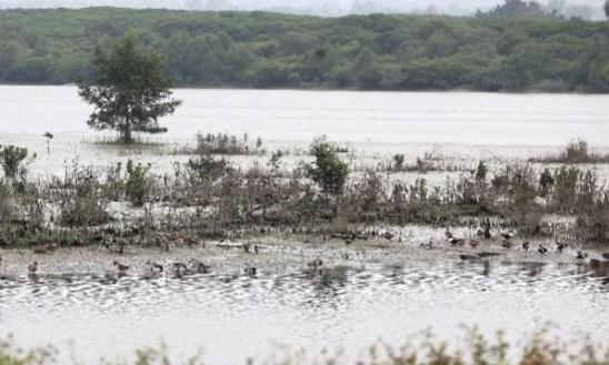 深圳1处湿地上榜国家重要湿地名录